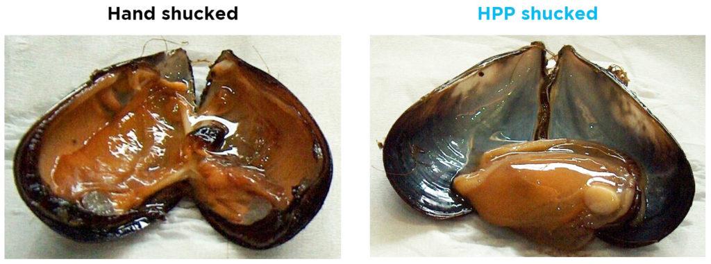 Extracción de carne de mejillones mediante HPP vs a mano