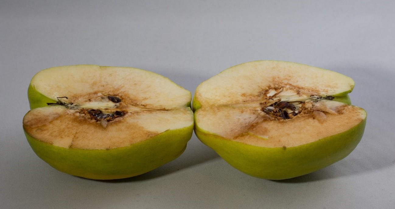 Pardeamiento de manzana, un ejemplo de reacciones de oxidación no deseadas en los alimentos. Fuente: Wikimedia Commons.